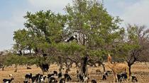 Goats On the Tree - Agadir, Agadir, Day Trips