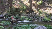 Experienced Angler's Private Half Day, Yosemite National Park, Private Sightseeing Tours