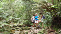 Guided Knysna Forest Elephant Hike, Port Elizabeth, Hiking & Camping
