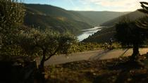 THE CHARMING DOURO BIKING TOUR, Porto, Private Sightseeing Tours