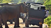 Private Jeep Safari tour at Wilpattu National Park from Sigiriya or Dambulla, Sigiriya, 4WD, ATV &...