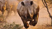 6 Days Kenya Tanzania Combined Safari - 4 Star Lodges, Nairobi, Private Sightseeing Tours
