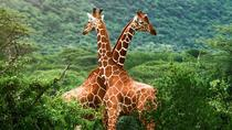 6 Days Tanzania Luxury Lodging Safari Highlights, Arusha, Private Sightseeing Tours