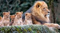 7 Days Kenya Tanzania Combined mid - range Safari, Nairobi, Private Sightseeing Tours