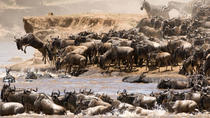 7 Days Luxury Migration Safari-Northern Tanzania, Arusha, Private Sightseeing Tours