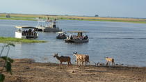 Full Day Game drive or Boat Cruise in the Chobe National Park River Front, Kasane, Attraction ...
