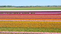 Keukenhof and Flowerfields, Volendam and Zaanse Schans with Small Group, Amsterdam, Day Trips