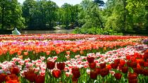 Keukenhof Gardens Day Trip from Amsterdam Including Guided Flower Fields Visit, Amsterdam, Private ...