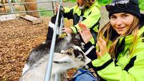 ISLAND CRUISE & GOAT FARM EXPERIENCE, Lofoten, Cultural Tours
