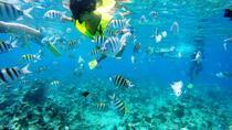 Snorkeling tour & Sosua Beach Day, Puerto Plata, Day Trips