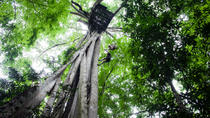 Chiang Mai Rainforest Canopy Zipline Adventure, Chiang Mai, Day Trips