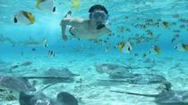 Bora Bora Snorkel Cruise with Shark and Stingray Feeding, Bora Bora, Day Cruises