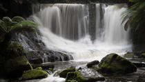 Mt Field National Park Including Russell Falls: Private Sightseeing and Photography tour from ...