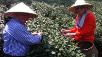 Private Full-Day Tea Culture Tour in Hangzhou from Shanghai, Shanghai, Plantation Tours