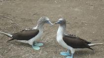 Galapagos Enchanting (5 Days), Galapagos Islands, Cultural Tours