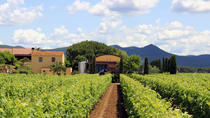 Bolgheri: Winery Tour with Wine Tasting in Terre del Marchesato, Livorno, Wine Tasting & Winery ...