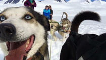 Helicopter and Glacier Dogsled Tour, Anchorage, Helicopter Tours