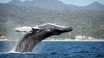 Tagesausflug mit Walbeobachtung ab Punta Cana, Punta Cana, Dolphin & Whale Watching