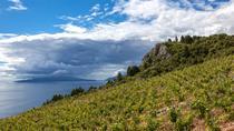 Smiley wine tasting on peninsula Peljesac, Dubrovnik, Wine Tasting & Winery Tours