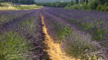 Small-Group Lavender Tour of Luberon Villages, Lourmarin, Roussillon and Sault from Aix-en-Provence ...