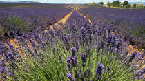 Small-Group Lavender Tour of Luberon Villages, Lourmarin, Roussillon and Sault from ...