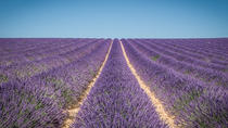 Small-Group Lavender tour of Valensole, Moustiers Sainte Marie and Verdon from Marseille,...