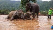 1-Day Happy Elephant Camp Training Course, Chiang Mai, Nature & Wildlife