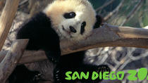San Diego Zoo and Animal Park: From or to Anaheim, CA