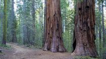 Giant Sequoia Grove Hike, Yosemite National Park, Hiking & Camping