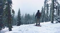 Snowshoeing Adventure to Badger Pass and Dewey Point, Yosemite National Park, null
