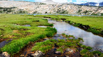 Tuolumne Meadows Tour, Yosemite National Park, Hiking & Camping