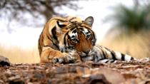Ranthambore Wildlife Safari Tour with Lunch, Jaipur, 4WD, ATV & Off-Road Tours