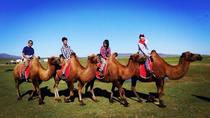 Experience Mongolia in 20 days, Ulaanbaatar, Multi-day Tours