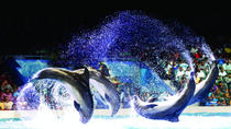 Dubai Dolphinarium Dolphin and Seal Show, ドバイ