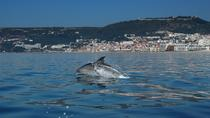 Dolphin Tour, Setubal District, Day Cruises