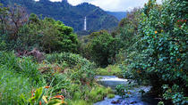 Hana Rainforest Helicopter Flight with Landing from Maui, Maui, Helicopter Tours