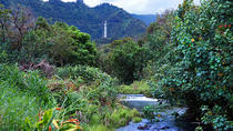Hana Rainforest Helicopter Tour with Exclusive Landing , Maui, Helicopter Tours