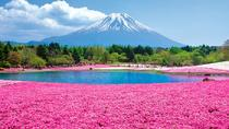 2018 Fuji Shiba-sakura Festival Admission Ticket including Transport Ticket, Chubu, Attraction...