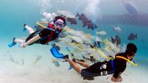 SNUBA Dive Experience in Montego Bay, Montego Bay, Nature & Wildlife