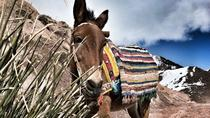 Une excursion culturelle d'une journée dans les montagnes de l'Atlas!, Marrakech, Day Trips