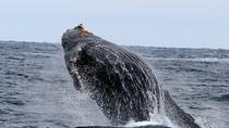 Private Whale Watching Tours for Groups up to 69 People