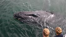Three Hour Private Whale Watching Tour - 1-6 People, Monterey & Carmel, Day Cruises