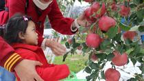 Apple picking experience in Iiyama, Nagano, Nagano, Plantation Tours