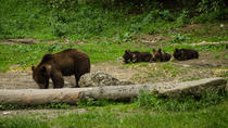 Bear watching experience near Brasov, Brasov, 4WD, ATV & Off-Road Tours