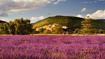 Lavender Fields Tour from Avignon, Avignon
