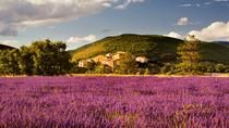 Small-group Lavender Fields Tour from Avignon, Avignon, Day Trips
