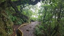 Private VIP Service Madeira Island Walking Hiking Santo da Serra - Ribeiro Frio, Funchal, Hiking &...