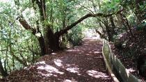 Private VIP Service Madeira Walking Hiking Levada Ribeiro Frio - Portela, Funchal, Hiking & Camping