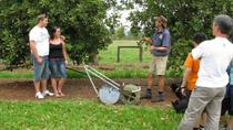 Atherton Tablelands Food and Wine Tour from Cairns, Cairns et le Nord tropical