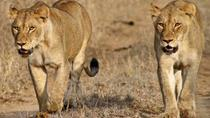 10 days Self-Drive Namibia Wilderness Safari (Accommodated), Windhoek, 4WD, ATV & Off-Road Tours